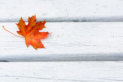 Fall maple leaf on white wooden background Stock Images