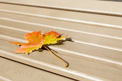 Last fall leaf as loneliness concept. Royalty Free Stock Photos