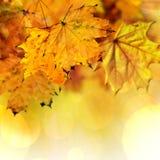 Fall maple leaves stock illustration