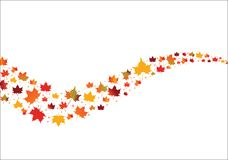 Fall Maple Leaves in curves shape  Stock Photography