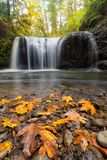 Fall Maple Leaves at Hidden Falls in Oregon USA. Maple tree leaves on rocks at Hidden Falls in Clackamas Oregon during fall season USA America stock photography