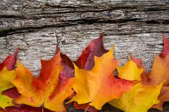 Fall maple leaves on wooden table Stock Images
