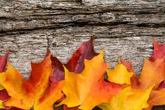 Fall maple leaves on wooden table Stock Image