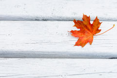 Fall maple red leaf on white wooden background Stock Images