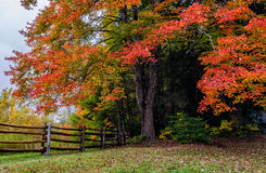 Fall maple and split rail fence, Blue Ridge Parkway. Autumn foliage along the Blue Ridge Parkway in North Carolina Stock Image