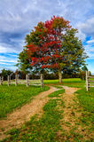 Fall maple and split rail fence, Cumberland Gap National Park. This old dirt road leads through an old split rail fence in Hensley Settlement of the Cumberland royalty free stock image