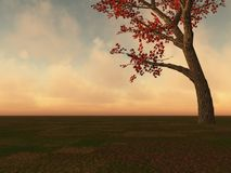 Fall Maple Tree on Horizon Stock Images
