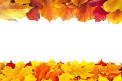 Fall maple and viburnum leaves royalty free stock photography