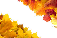 Fall maple and viburnum leaves Royalty Free Stock Images