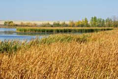 Fall marsh Royalty Free Stock Photos