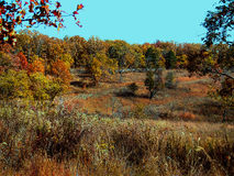 Fall meadow with colorful trees Stock Image