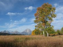 Fall meadow in Grand Teton National Park Royalty Free Stock Photography