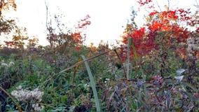 Fall Michigan Natives Royalty Free Stock Photos