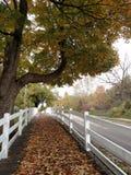Fall in Michigan. Novi, Michigan. Historical Tollgate Farm in the prime of fall Royalty Free Stock Photography