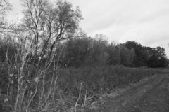Fall in the Midwest. A picture of the woods in the Fall of the Midwest t, in WI, that border a childrens playground Photo taken Nov 1, 2018 in black and white royalty free stock photo