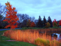 Fall in Minnesota stockbilder