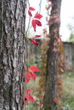 Fall at Monza Park Royalty Free Stock Image