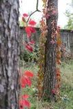 Fall at Monza Park Royalty Free Stock Photos