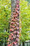 Fall at Monza Park Stock Photos