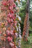 Fall at Monza Park Stock Photo