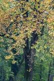 Fall at Monza Park Royalty Free Stock Photography