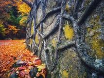 Fall mood royalty free stock photography