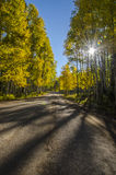 Fall Morning Drive in the Aspens. Dirt road winding through yellowing aspen trees with the sun streaming through Stock Images