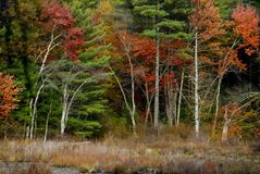 Fall motif #1. Fall scene in New England marshlands stock images