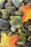 Fall motive with River stones. Group of river stones polished million years from ice and water and Fall coloured maple leaves Stock Photo