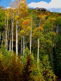 Fall mountain. Kebler Pass, Colorado Stock Images