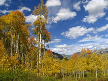 Fall mountain. Colorado Fall colors Stock Photography