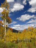 Fall mountain. Colorado Fall colors Stock Images