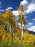 Fall mountain. Colorado Fall colors Royalty Free Stock Image