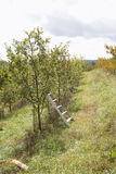 Fall mountain apple orchard Stock Images