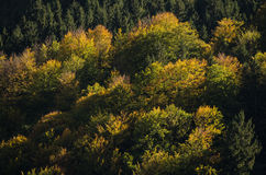 Fall in a mountain forest Stock Photos