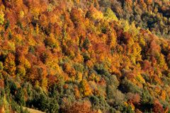 Fall mountain forest royalty free stock photos