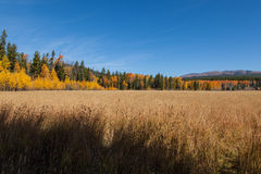 Fall Mountain Meadow Landscape Stock Photography