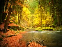 Fall at mountain river. Low level of water, gravel with vivid colorful leaves. Mossy boulder Stock Photo