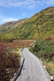 Fall mountain scenic, nagano japan. Autumn landscape in the mountain, wooden walk way in bog Royalty Free Stock Photo