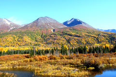Fall In The Mountains. Fall colors in the Wrangle Mountains,Alaska Royalty Free Stock Photo