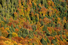 Fall in mountains Royalty Free Stock Images