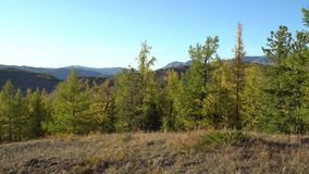 Fall in Mountains. Landscape panorama. Valley of the Chuya River. Altai. Siberia stock footage