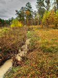 Fall Muddy Stream in Woods Stock Images
