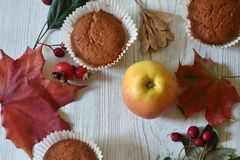 Fall muffins on white rustic background. Autumn vibes through fall backgrounds royalty free stock images