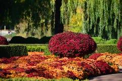 Fall mums at the Garden Stock Image