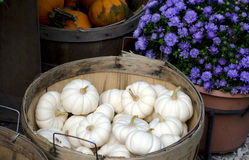 Fall mums and white pumpkins Stock Photography