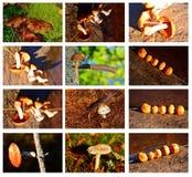Fall mushrooms Stock Photography