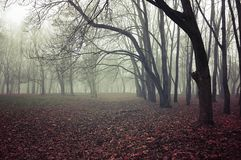 Fall mysterious landscape - foggy fall forest with bare fall trees and fallen red fall leaves. On the ground stock photography