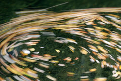 fall nära virvelvatten Royaltyfri Foto