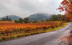 Fall in Napa royalty free stock photos